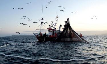 Empresários ameaçam abandonar peixe no mar