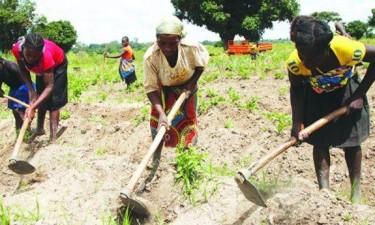 Camponeses em Malanje recebem financiamento de 130 milhões AKZ