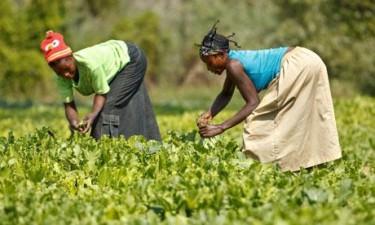 UE disponibiliza 65 milhões USD para agricultura familiar