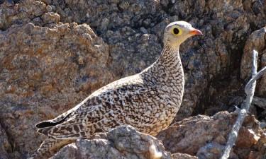 Fundação Kissama aborda biodiversidade