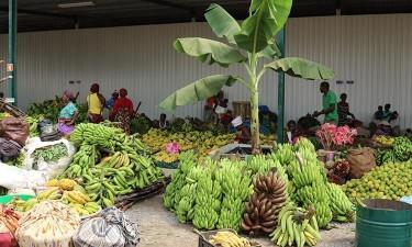 Feira da Banana do Bengo arranca na sexta-feira