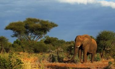 Governo investe 60 milhões na bacia do Okavango