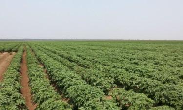 Escassez de fertilizantes provoca especulação