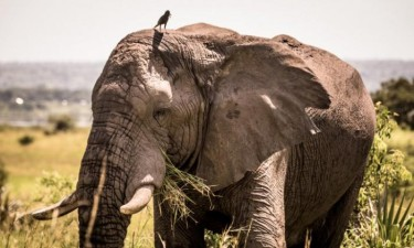 Países podem deixar convenção animal