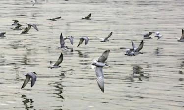 Preservar áreas naturais evita extinção de espécies