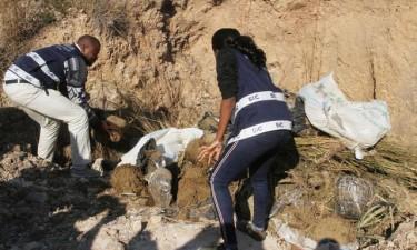 Corpo de recém-nascida devorado por cães no Uíge