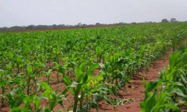 Projectos agrícolas vão receber 480 mil dólares