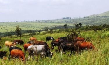 Recenseamento Agro-pecuária arranca em Fevereiro de 2020