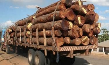 Governo suspende transportação de madeira