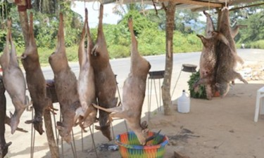 SIC apreende mais de 400 quilos de carne de caça