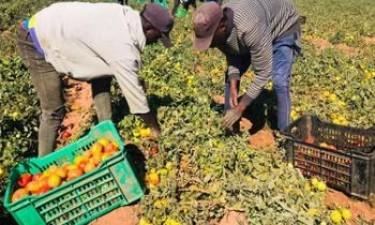 AgriHuíla rende mais de 90 milhões de kwanzas