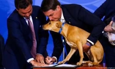 Brasil aprova projecto de lei para quem maltratar cães e gatos