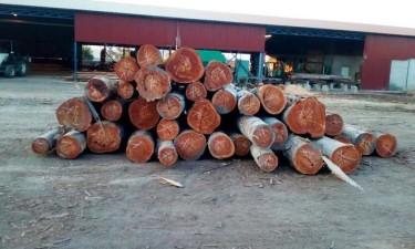 Falta de licença cria constrangimentos aos madeireiros