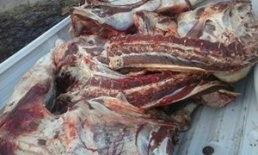 SIC apreende carne congelada imprópria para o consumo