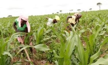BDA já financiou 500 projectos agrícolas