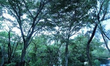 IDF prepara 30 mil árvores para presente época florestal