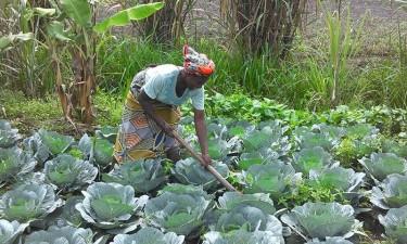 Kwenda vai distribuir mais de 15 mil milhões kz até ao fim do ano