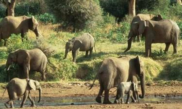 Detidos caçadores furtivos no kuando-kubango