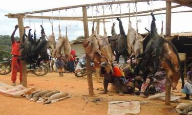 OMS pede suspensão mundial da venda de mamíferos vivos em mercados