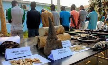 Angola aperta combate à caça furtiva