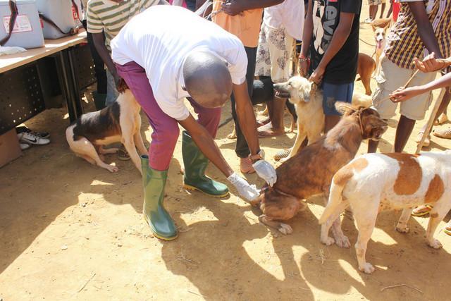 Campanha prevê vacinar mais de 30 mil animais