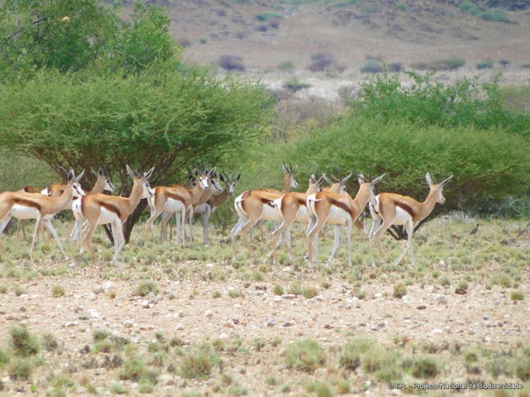 Fórum analisa biodiversidade