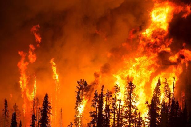 Incêndio florestal faz 42 mortos