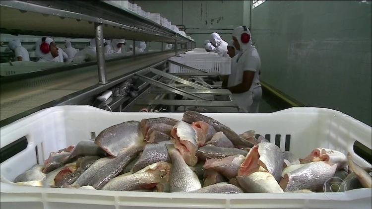 Angola quer certificação para exportar peixe congelado