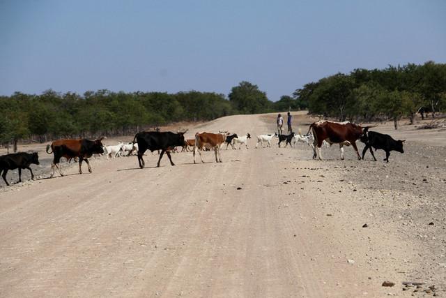 População está a cobrar para alimentar e dar de beber animais