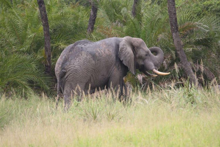 Elefantes destroem várias lavras