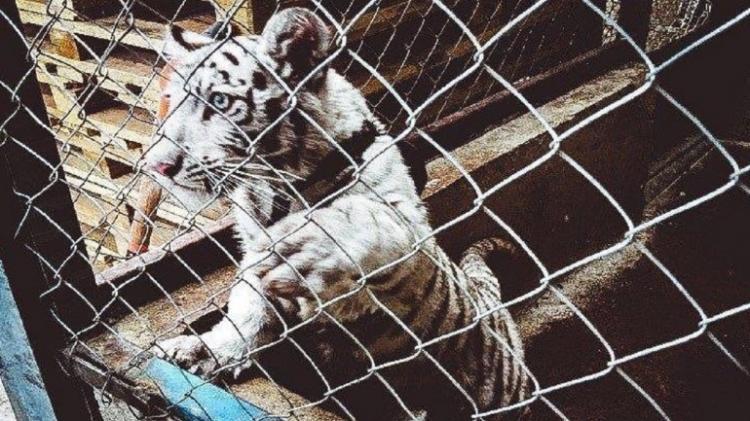 Milhares de animais apreendidos em operação mundial