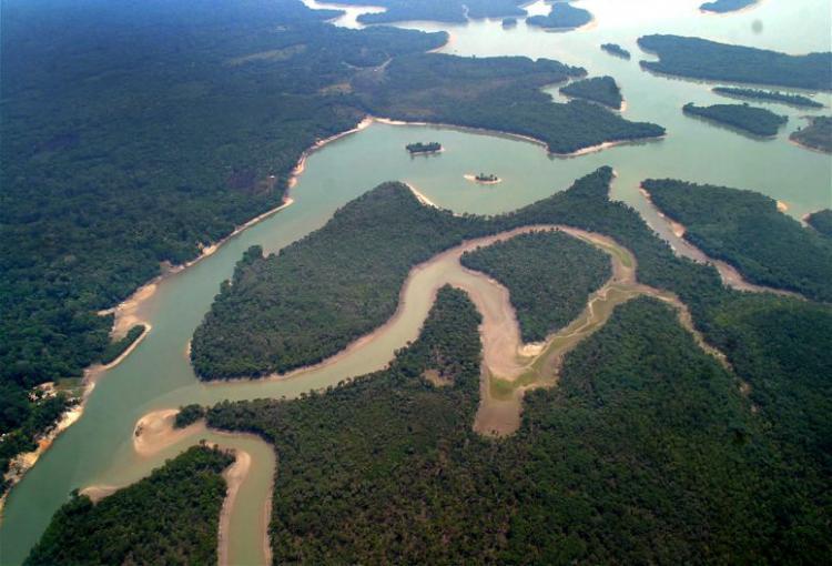 Amazónia é o bioma mais afectado pelos incêndios