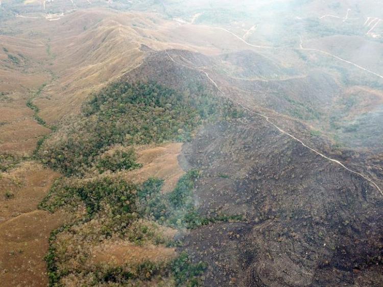 Fundo de 100 milhões para a biodiversidade na Amazónia