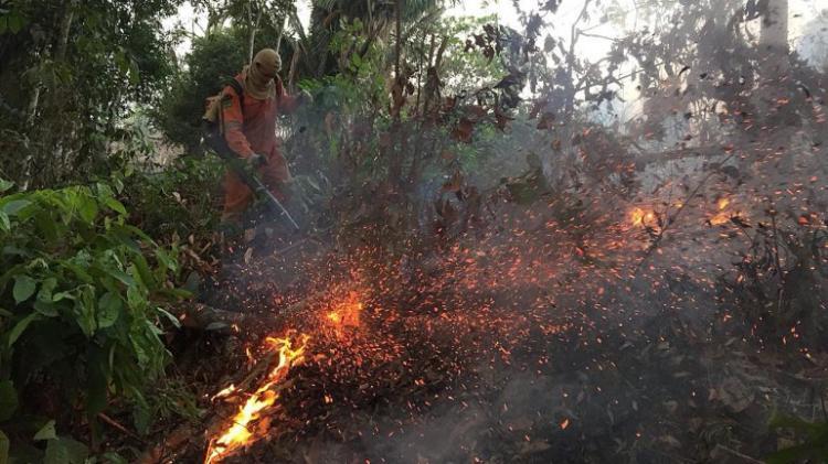 Investidores lutam contra desflorestação