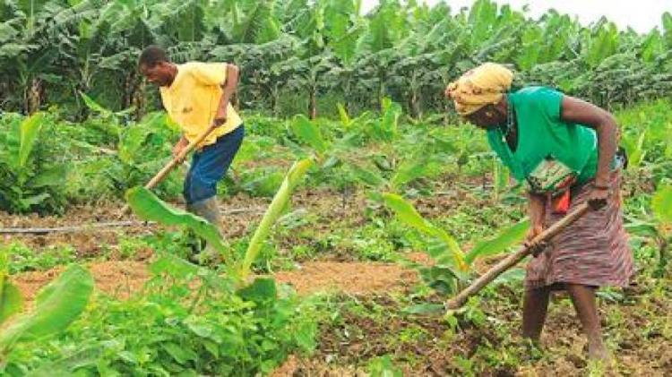 Mais de 43 mil famílias envolvidas na campanha agrícola