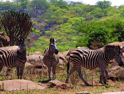 Angola assina acordo de gestão do parque do Iona