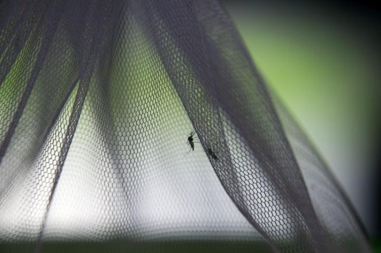 Paludismo pode voltar nas pandemias