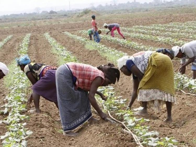 MOSAPII investe 63 milhões kz em agricultores familiares