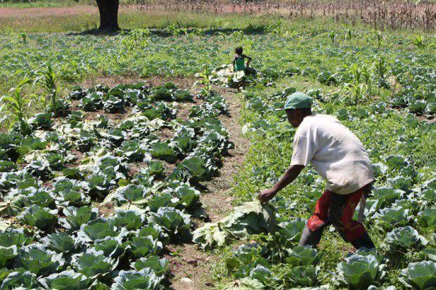 BDA disponibiliza 50 milhões AKZ ao sector agrícola