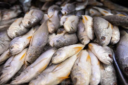 Centro de apoio à pesca deve arrancar em Julho