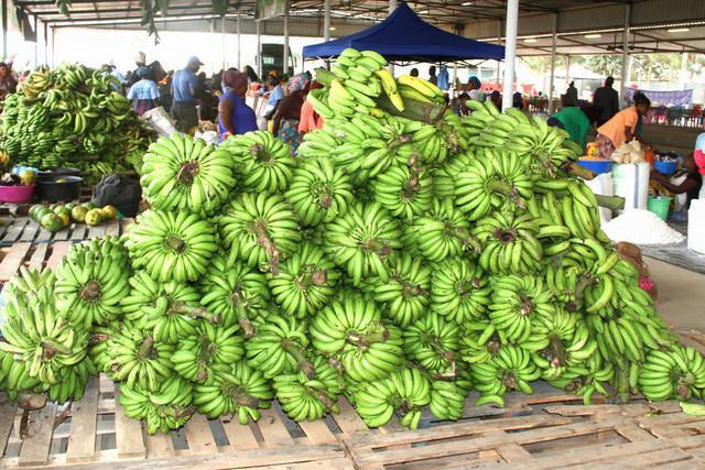 Fazenda Girassol exporta banana e mamão para Portugal