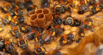 IDF investe no aumento da produção de mel