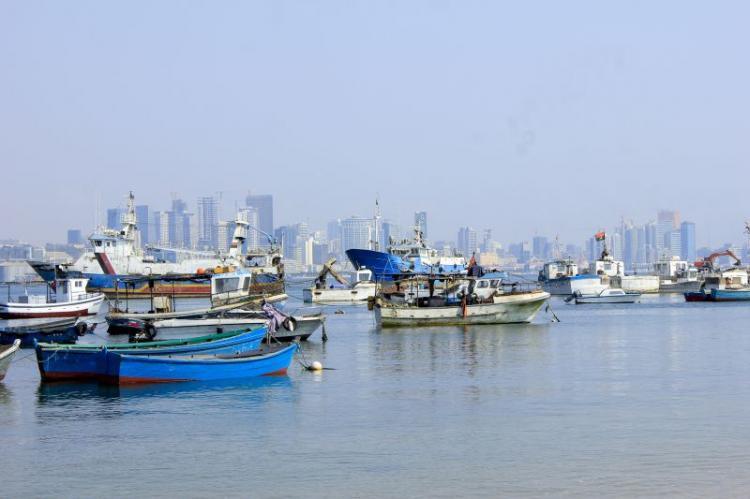 Governo investiga peixes mortos na Baia de Luanda