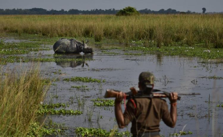 Polícia deteve 201 caçadores furtivos e apreendeu 45 armas