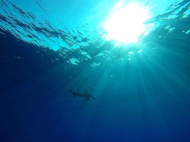 Autoridades investigam denúncia de extermínio de tubarões