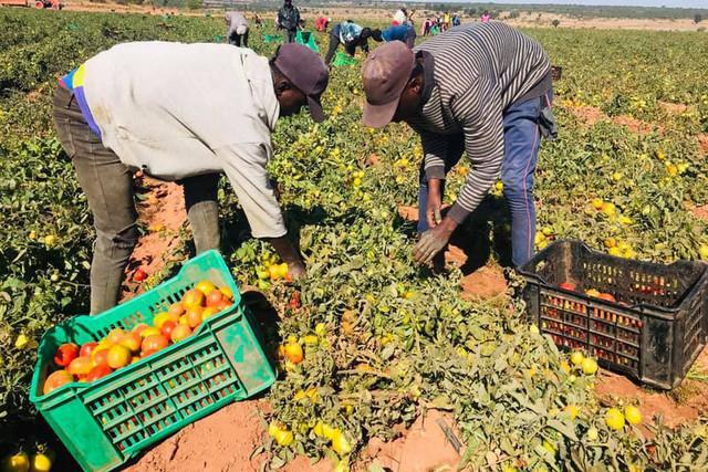 Lunda-Norte prevê aumento da produção agrícola
