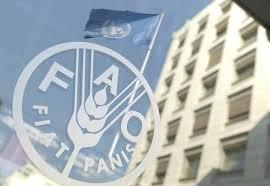 Angola eleita vice-presidente do conselho da FAO