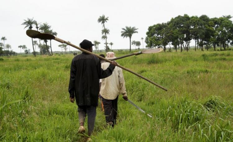 Angola vai regulamentar uso de fertilizantes na agricultura