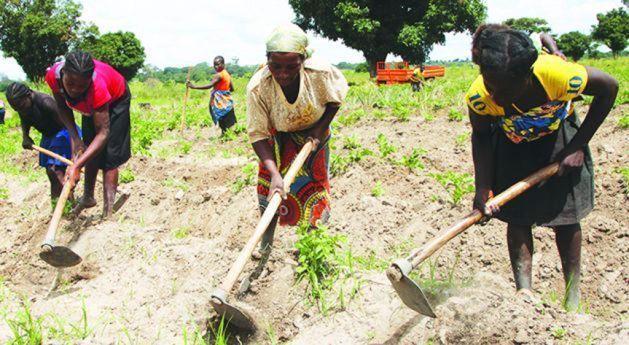 Caixas comunitárias de camponeses poupam 30 milhões AKZ