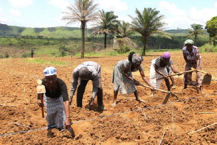 Cooperativas agrícolas beneficiam de 900 milhões AKZ